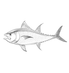 Atlantic bluefin tuna vector