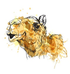 Colored hand sketch of the head of a camel vector image vector image