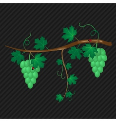 Grape vine white vector