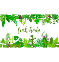 Popular fresh realistic herbs and flowers logo vector