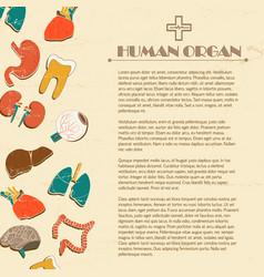 Human internal organs background vector