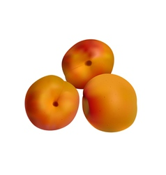 Orange apricots isolated on white vector