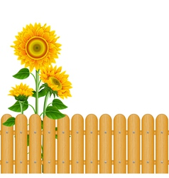 Sunflowers vector image vector image
