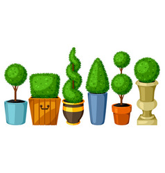Boxwood topiary garden plants set of decorative vector