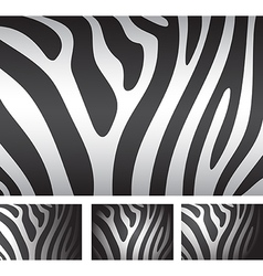 zebra skin backgrounds vector image vector image