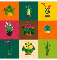 Houseplants indoor and office vector
