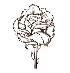 Hand drawn rose flower Royalty Free Vector Image