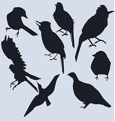 a set of dark silhouettes of birds vector image vector image