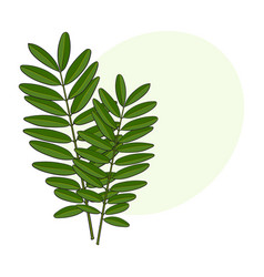 beautiful elegant hand drawn senna twig branch vector image vector image