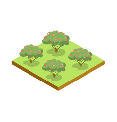 apple trees isometric 3d icon vector image