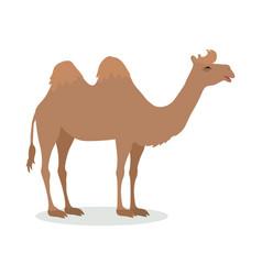 Bactrian camel cartoon icon in flat design vector
