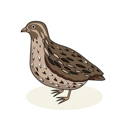 a bird quail Cartoon style vector image