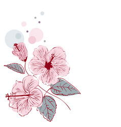 Hibiscus flower on white background vector
