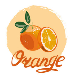 Orange whole and slices of oranges vector