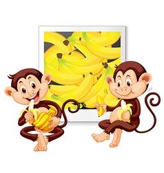 Two monkeys eating bananas vector image