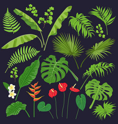 tropic leaves and flowers vector image vector image