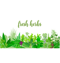 Popular realistic herbs and flowers with text set vector