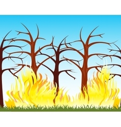Fire in wood vector image