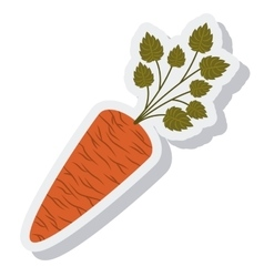 Carrot vegetable isolated icon vector