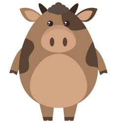 brown cow on white background vector image vector image