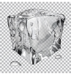 Transparent ice cube vector image