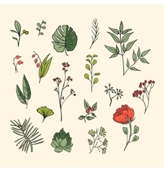 Plants and herbs icons set vector image