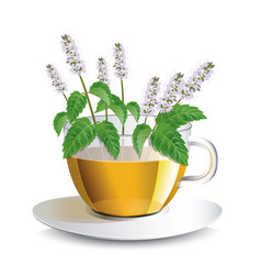 Aromatic mint tea in a transparent cup vector