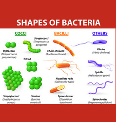 Types of bacteria vector image