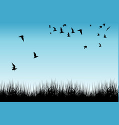 field of grass and silhouettes of flying birds vector image