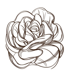 hand drawn rose floral design element outline for vector image