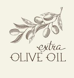 Sprig of olive decorative sketch vector