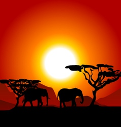 Silhouettes of elephants on african sunset vector
