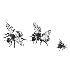flying bees isolated on white background vector image vector image