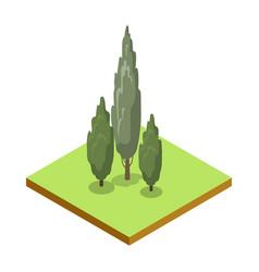 poplar tree isometric 3d icon vector image