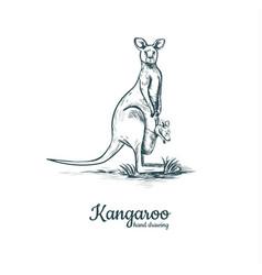 kangaroo with baby kangaroo baby vector image vector image