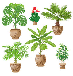 potted plants set vector image vector image