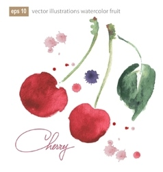 Watercolor image cherries with splashes vector