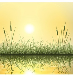 Grass and reeds vector