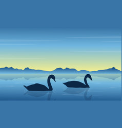 Swan on lake at sunrise scenery vector