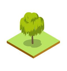 willow tree isometric 3d icon vector image