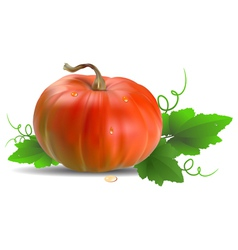 Orange pumpkin with leaves vector