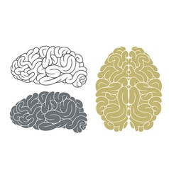 Brain head mind vector