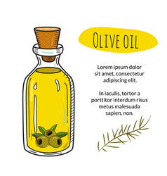 colorful hand drawn olive oil bottle with sample vector image vector image