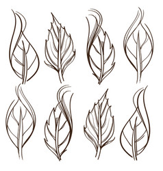 hand drawn set of rose leaves outline on white vector image vector image