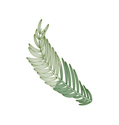 isolated plant leaves vector image