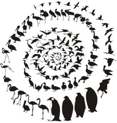 Birds waterfowl in spiral vector