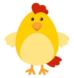 cute chicken on white background vector image vector image