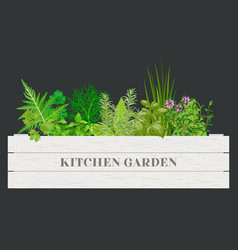 White wooden crate of farm fresh cooking herbs vector