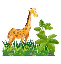 wild giraffe in forest vector image vector image