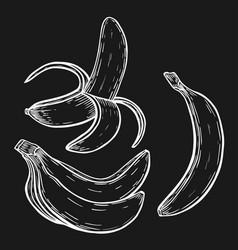 banana fruit set vector image vector image